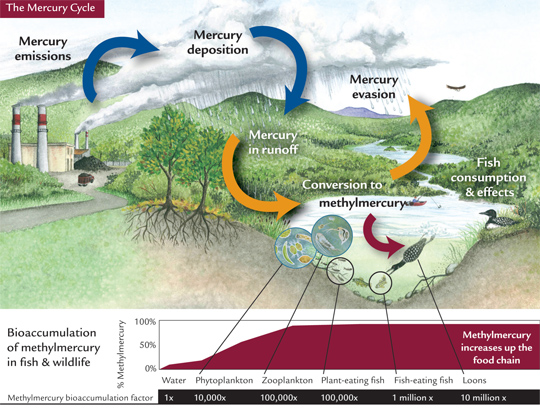 Mercury Cycle and the Great Lakes